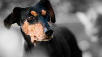 Las ventajas de alimentar a tu perro con un pienso de alta gama
