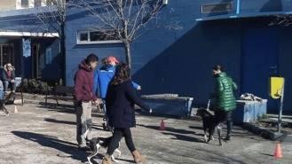 El PSOE cirtica la externalización del servicio del Centro de Protección Animal