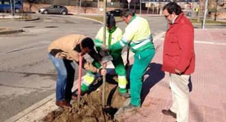 Plantados 282 árboles y 11.000 arbustos para reponer el arbolado