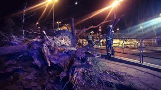 Dos heridos, uno de ellos grave, al caer un árbol sobre un turismo