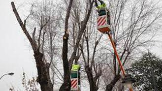 El Ayuntamiento cortará árboles en mal estado en la avenida General Palacios