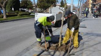 Plantados 350 árboles en calles del centro y urbanizaciones durante febrero