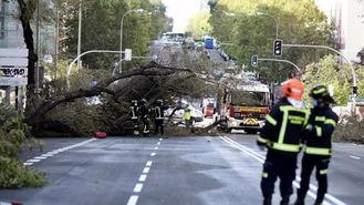 Se desploma un gran árbol sobre un coche en Príncipe de Vergara, el conductor herido leve