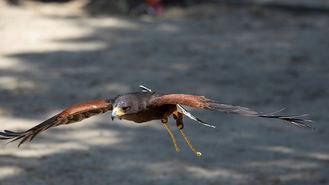 Fiscalía investiga la muerte el ahogamiento de aves en balsas de regadio