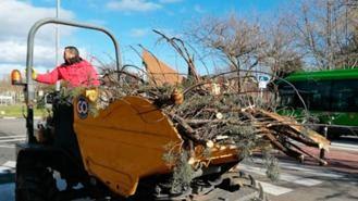 El Ayuntamiento cifra en 14 M los daños al arbolado ocasionados por Filomena