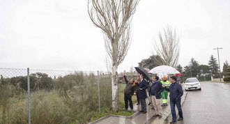 Estudio para retirar los árboles secos y los que tienen riesgo de caída