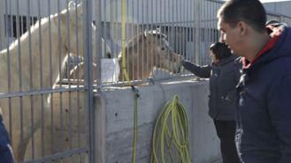 126 perros, 84 gatos y cinco caballos esperan ser adoptados en la capital
