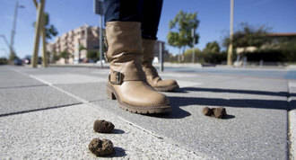 Las quejas por los escrementos de perro en las calles crecen un 20%