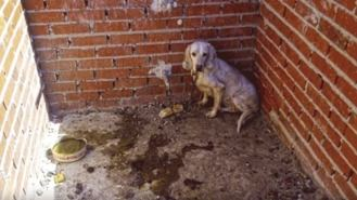 Juzgan a un cazador acusado de maltratar a 55 perros en Villa del Prado
