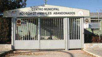 Una Asociación denuncia al Ayuntamiento por no hacerse cargo de un perro abandonado