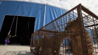 El Ayuntamiento prohibe la instalación de circos y espectáculos con animales
