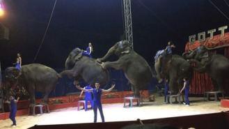 Los circos con animales tienen una año de prorroga para reorientar sus negocios