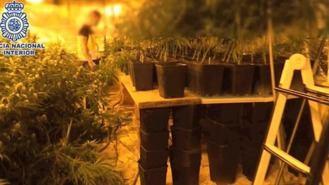 Cae uno de los mayores entramados en importar heroína y exportar marihuana