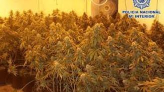 Tres detenidos y 1.200 plantas de marihuana incautadas en Lozoyuela