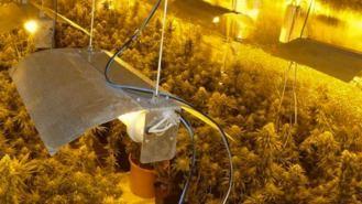 Tres detenidos y tres plantaciones de marihuana ` 'indoor' desmanteladas en la Cañada Real