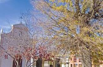 El olmo de la Ermita del Cristo, árbol singular de la región