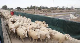 Las `ovejas bombero´estarán hasta el verano para prevenir incendios