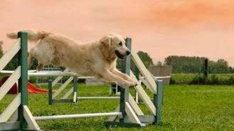 El nuevo parque canino que estará ubicado en el Nuevo Tres Cantos