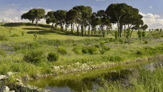 Las obras del futuro parque de Valdebebas comenzarán 'de forma inmediata'