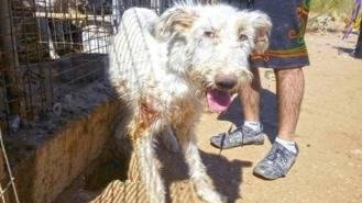 Piden 40 años de cárcel para un cazador por maltratar a 54 perros