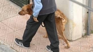 El Ayuntamiento reparte 2.000 botellas de agua para limpiar el orín de los perros