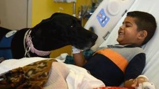Los niños hospitalizados en el Rey Juan Carlos recibirán la visita de sus perros los martes