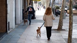 Puente de Vallecas fue el distrito con más perros y Latina el de más gatos de mascota