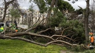 Archivada la causa del niño muerto por la caída de un árbol en El Retiro al no apreciar delito