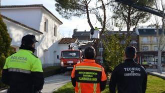 El Ayuntamiento tala dos pinos afectados por la ciclogenesis Hugo