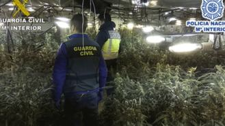 22 detenidos de una red china dedicada al cultivo de marihuana