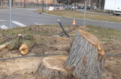 El PSOE denuncia una tala indiscriminada de árboles en la localidad