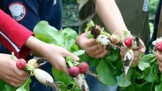 El Botánico acogerá el 3 y 4 de junio la feria de alimentación saludable, 'Expo Big Picnic'