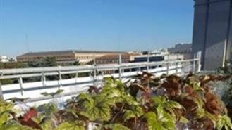 El Ayuntamiento ajardinará una de las terrazas de Cibeles, Casa de la Villa y 17 juntas de distrito