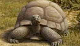 Tortugas de dos metros se pasearon por la Gran Via hace 15 millones de años